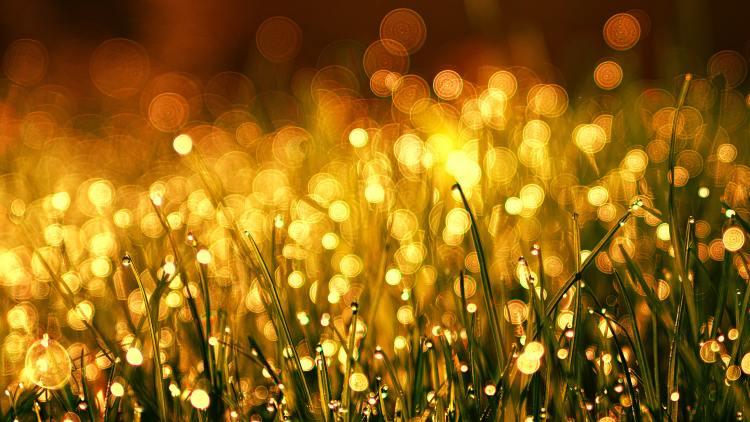 Golden vibes in the golden era