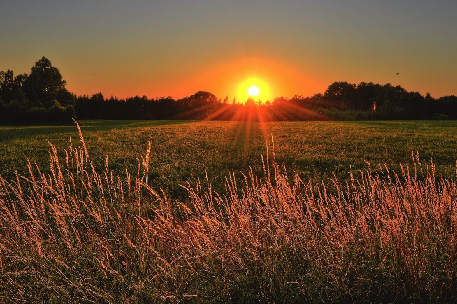 Sunlight_golden_era